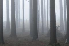 D10 P_Mlha v lese
