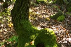 zachodovy_strom